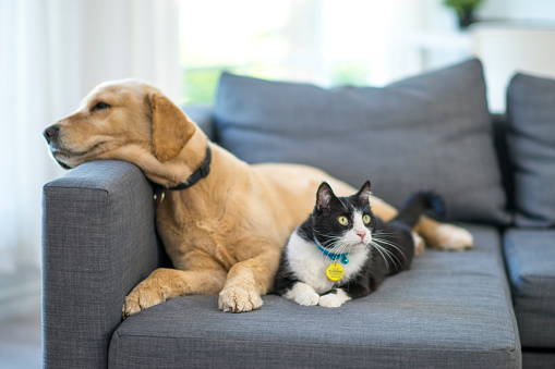 Study looks at how brands can appeal to pet owners | Articles
